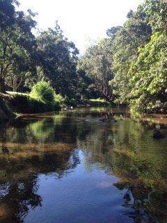 Latest News – Treeforce has two new projects for 2015 both focussed on Freshwater Creek